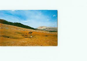 Vintage Postcard Sheep Herd Bear Lake Lonesome Mountain Silver Yellowsto # 3244