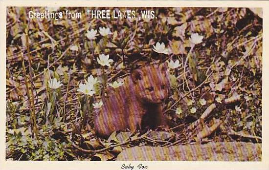 Baby Fox, Greetings from Three Lakes, Wisconsin, 40-60s