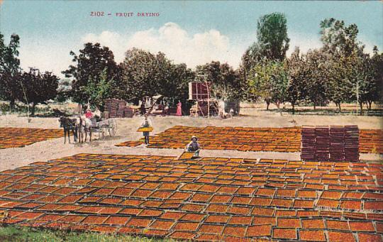 Edward H Mitchell Fruit Drying In California
