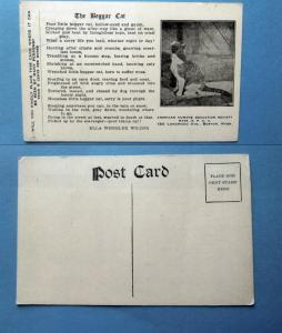 The Beggar Cat Vintage Postcard Unused American Humane Society SPCA