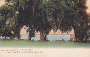 Live Oak on St. John's River, Florida, 00-10s