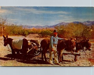 Gold Prospector With His Donkeys 1957