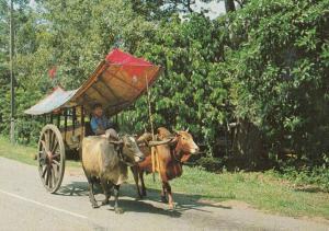 Bullock Cart Malaysia Postcard