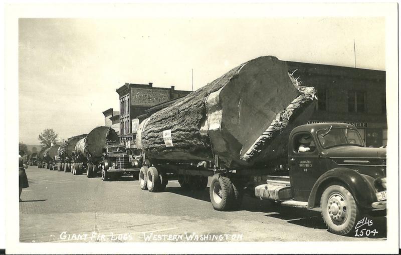 Giant Fir Logs on Trucks Western Washington RPPC Postcard Vintage Black White