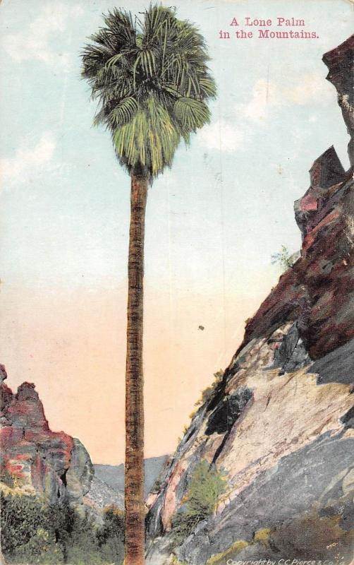 USA A Lone Palm in the Mountains 1913