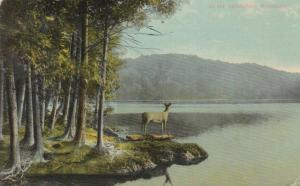 Deer - Buck - Adirondacks, New York - NY Central Card - pm 1914 - DB