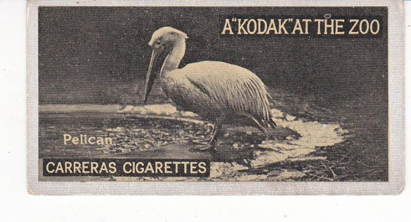 Cigarette Cards Carreras A Kodak at the Zoo 1st series No 13 Pelican