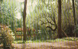 South Carolina Charleston Magnolia Gardens On The Ashley River Road