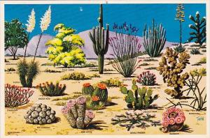 Cacti And Desert Flora Of The Great Southwest Flowers