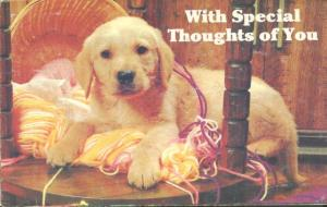 Dog Card, With Special Thoughts of You, used Postcard