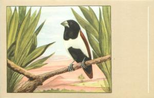 Three coloured nun bird postcard