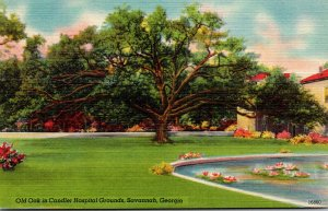 Georgia Savannah Old Oak In Candler Hospital Grounds