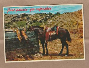 Postcard Just Pausin' for Refreshin Western Cowboy and Horse