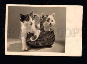 014414 Charming KITTENS in Basket Vintage AMAG PHOTO PC