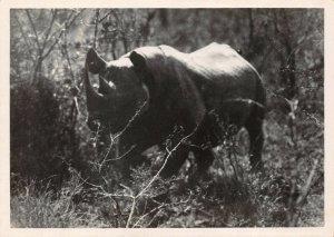 Vintage Postcard No.21 Black Rhinoceros Hluhluwe Reserve Zululand S Africa 40Y
