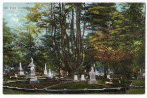 Old Pine Tree, St. Stephen NB