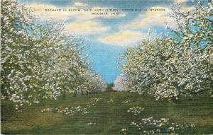 Wooster Ohio~Agricultural Experimental Station~Orchard in Bloom~1940s Linen
