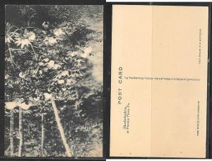 Rhododendron at Pocono Pines, PA postcard