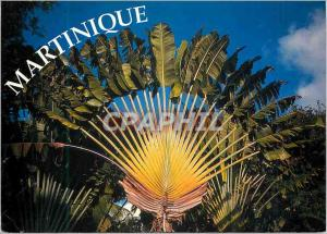Modern Postcard Martinique Traveler's Tree
