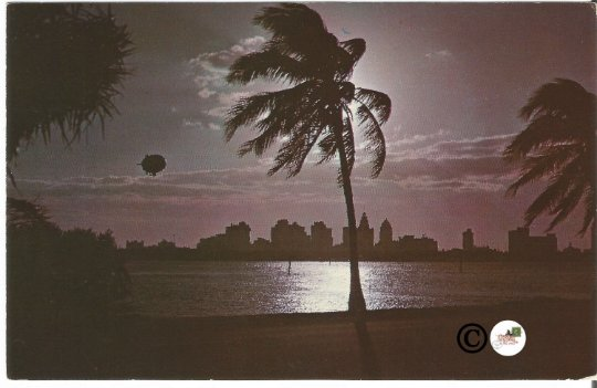 Vintage Night Scene Postcard, Zeppelin Flying over Miami Florida Magic City