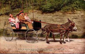 New York City Bronx Zoo Algerian Donkeys Pulling Carriage New York Zoological...