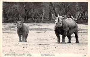 Kenya Amboseli National Reserve Black Rhinoceros Real Photo Postcard J65922