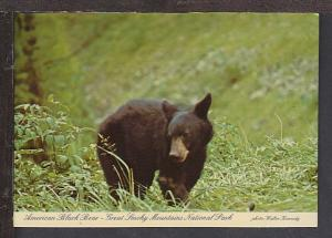 Black Bear Great Smokey Mountains Postcard BIN
