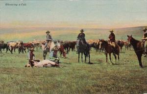 Cowboys Throwing A Calf 1911