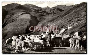 Old Postcard The pyrenees Flock of Sheep