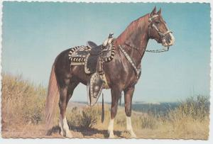 HOSS, HORSE, unused Postcard
