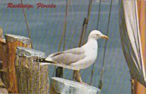 Florida Rockledge Pier Scene With Seagull