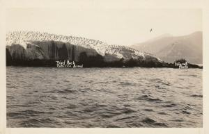 RP: CATALINA ISLAND ,California, 30-40s ; Bird Rock