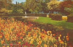 Flower Display at Walsall Arboretum 1970s West Midlands Postcard