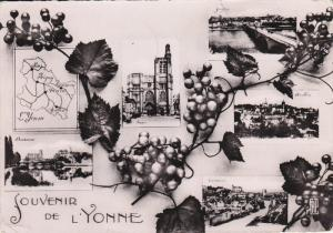 RP; 5-Views, Souvenir de L' YONNE, France, Grapevines, PU-1955