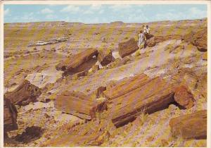 Petrified Forest National Monument Airzona