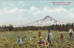 Picking Strawberries In Oregon With Mt Hood In The Distance
