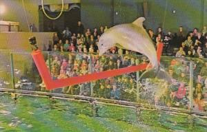 Pennsylvania Philadelphia Jumping Porpoise Aquarama Theatre Of The Sea