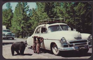 Mama Bear,Car Postcard
