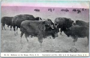 Pierre, South Dakota Postcard Buffaloes on the Range Bison - 1912 Cancel