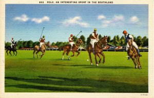 Polo in the South Land