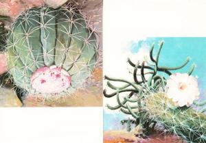 Brazil Brazillian Cactus Poisonous Plant 2x Rare Photo Postcards