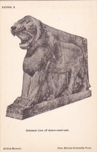 Palace of Assur wall panel , Iraq , 00-10s : Colossal Lion of Ashur-nasir-pal