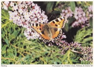 Rollesby Butterfly Norfolk Village Butterflies Postcard