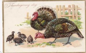 Thanksgiving With Family Of Turkeys 1908 Tucks