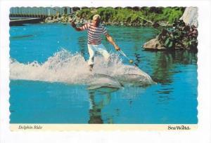 Sea World, Orlando Florida, 1980   Dolphin Show