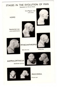Stages of the Evolution of Man, British Museum, Used 1970