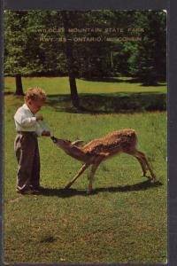 Deer,Wildcat Mountain State Park,Ontario,WI BIN