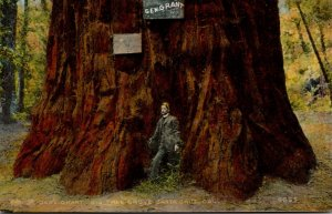 California Santa Cruz Big Tree Grove General Grant