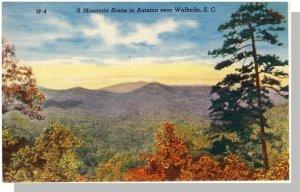Walhalla, South Carolina/SC Postcard,Mountain View, Near Mint!