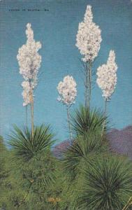 Desert Yucca In Bloom